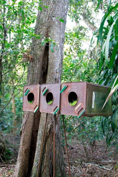 Nature Factor…. Tamara Kirby-Corrie Wright
